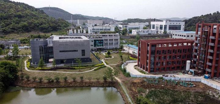 """""""Nous avons trois souches de virus vivants"""", affirme Wang Yanyi, directrice de l'Institut de virologie de Wuhan. Mais, précise-t-elle, leur similarité avec le Covid-19 """"n'est que de 79,8%"""". © HECTOR RETAMAL AFP"""
