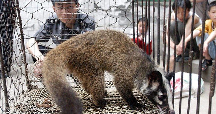 China is cracking down on the wildlife trade. © AFP